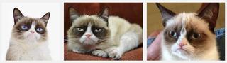 grumpycat.png